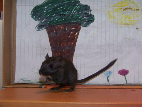 Warrior the Gerbil